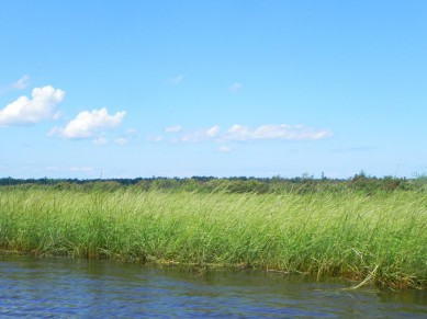 Wild Rice, Ecology, Harvest and Management