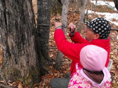 See how Ojibwe people make maple syrup today.